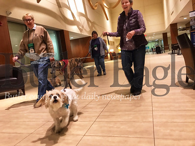 Nancy Kieffer, a member of the Butler Dog Training Association, walks Sprite, an all American mix, who is a certified therapy dog, through the halls of Butler Memorial Hospital. Cheryl Sanson and Betty Scarnato, who are also members, follow next to Kieffer with their certified therapy dogs.