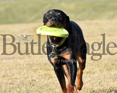 Harold Aughton/Butler Eagle: Louie, a 7-year-old, rescue Rottweiler, played a game of frisbee with his owner Bill Sloboda of Mars Wednesday afternoon, January 15, 2020.