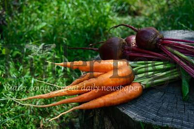 Your September calendar of gardening chores