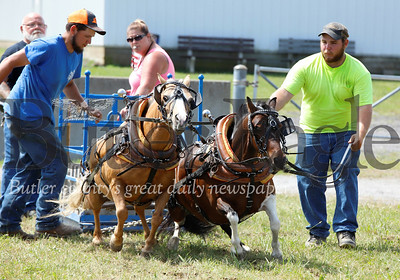 Matt Ferringer (right) leads his horse team of Nova and Ed with Brandon Ferringer(left). The team finished third in the 34-inch minature horse class. Seb Foltz/Butler Eagle