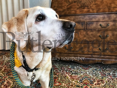 O'Shea, a 15-year-old Labrador and golden retriever mix, retired last summer as the grief companion dog at Thompson-Miller Funeral Home after she started in 2004. O'Shea came from Canine Companions for Independence, a non-profit organization. Photo by Gabriella Canales