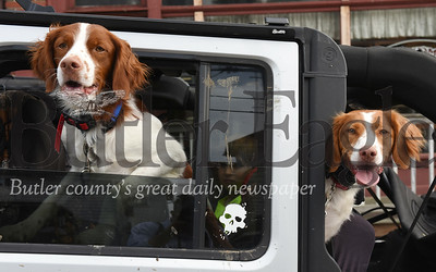 Harold Aughton/Butler Eagle: Lexi and Hatfield joined their owner, Bryan Felsing of Butler in the jeep parade, Friday, June 7.