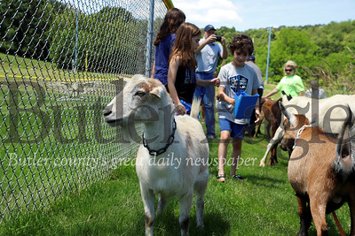 Kids and volunteers helped herd goats from Allegheny GoatScape to their temporary penn in Cranberry's North Boundary Park. The herd will be on site for the next few weeks grazing on overgrown grass and weeds. Seb Foltz/Butler Eagle