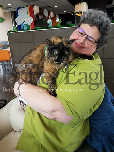 Elaine Zalewski cuddles with Marbles her 13-year-old Maine Coon cat PHOTOS BY ERIC FREEHLING