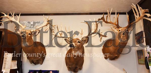 Harold Aughton/Butler Eagle: Rocco raises wall hangers on his whitetail deer farm near Boyers