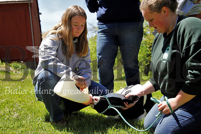 Emma Bowser feeds milk to a two-week-old cow -- after it briefly escaped it's pen --  while Maggie Bowser tends to its leash. Seb Foltz/Butler Eagle