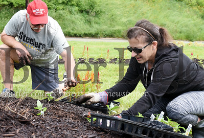 Harold Aughton/Butler Eagle: Tim and Patty McCune joined nearly two dozen volunteers from the Butler Rotary (and????) to plant more than 400 flowers on the island a the intersection of Hansen and New Castle raods for Western Pennsylvania Conversancy.