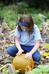 Butler Catholic School third-grader Cecilia Livengood inspects and pets a pumpkin during a field trip to the pumpkin and squash patch located behind Butler Catholic School at 515 E Locust St  in Butler on September 29, 2020. The pumpkins will be used as part of an upcoming Pumpkin Roll fundraiser for the school. Lauryn Halahurich/Butler Eagle  Lauryn Halahurich/Butler Eagle