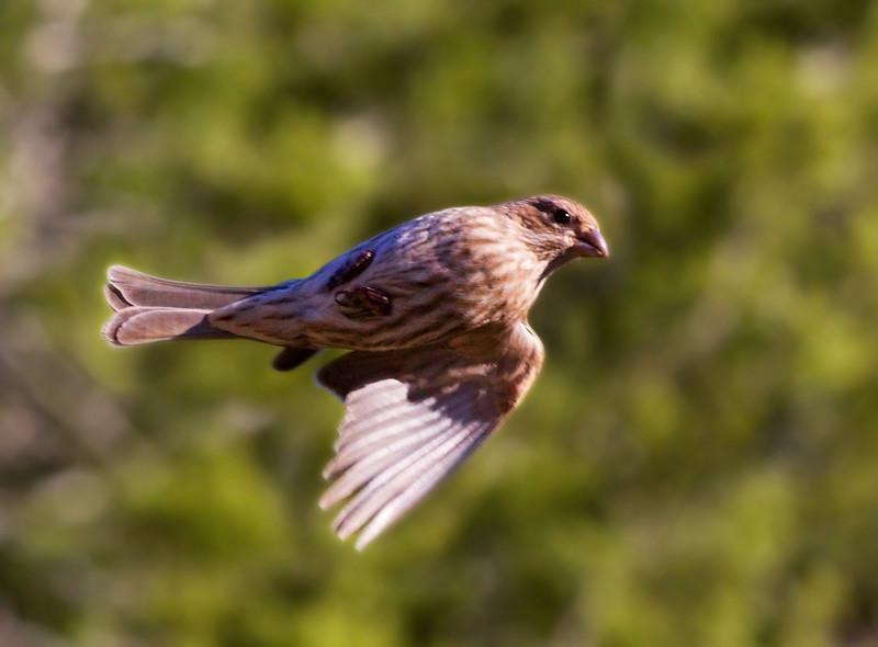 8 Jan: Finch