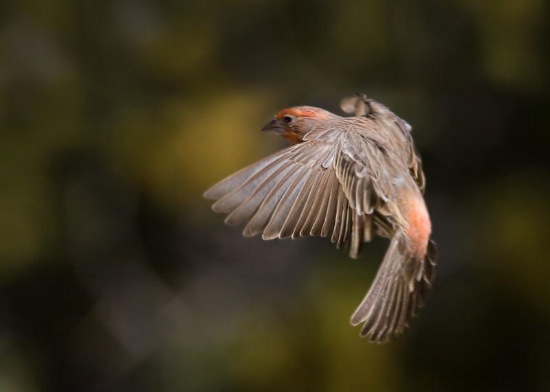 6 Jan: Finch