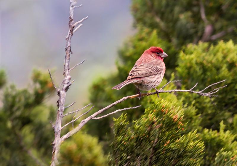 12 Jan: Finch