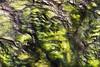 18 Feb: Appalachians from 30,000' or green algae from 3.0000'?