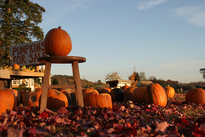 Nov 1, 2004 Pumpkins along Route 116