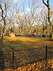 """Toward the walkway through Central Park"" - Daily Photo - 12/12/12<br /> <br /> Must have been stunning with all the leaves this Fall, thought the orange brown color leaves and empty branches reaching toward the sky were nice though too."