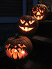 """Pumpkins - Halloween 2012"" - Daily Photo - 11/02/12"