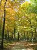 """Golden Walkway"" - Daily Photo - 10/15/12<br /> <br /> Herrick Lake, Wheaton, Illinois"