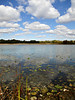 """""""Cotton on Lake Patterson"""" - Daily Photo - 10/19/12<br /> <br /> Productive Lunch Hour!<br /> <br /> Thanks for the comments and input I have received over the last several days."""