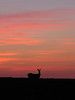 """Silhouette of a Doe in Wisconsin"" - Daily Photo - 11/20/12"