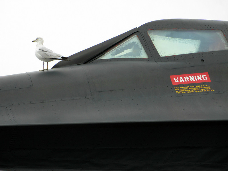 """""""Hitching a ride ... """" - Daily Photo - 06/08/13<br /> <br /> Seagull aboard a SR-71 aboard the USS Intrepid."""