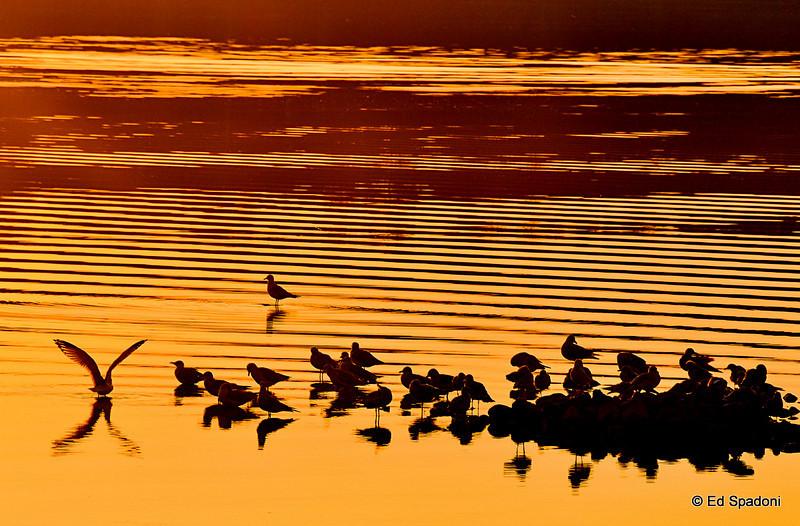 Basking birds<br /> 10-4-09
