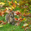"""Nuts to you!""<br /> 11/16/09<br /> This little fellow stared at me for a good long time. I think he was waiting for me to leave so I wouldn't see where he was hiding his winter ""cache"".<br /> See an alternative version here:  <a href=""http://bit.ly/7uhlTv"">http://bit.ly/7uhlTv</a>"