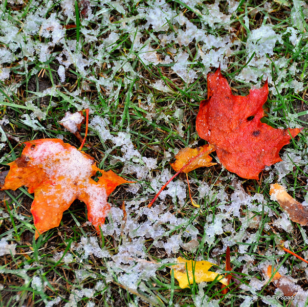 Leaves descend, followed by snowflakes.  <br /> It's the cycle that marks the passage of the year.<br /> <br /> Just wish the cycle took a little longer... it's too #@^!%* early for snow!<br /> 10/16/09