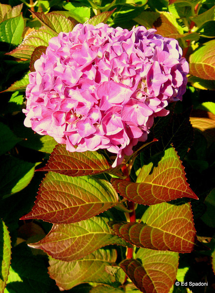 Late bloomer<br /> 10/29/09