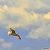 In flight<br /> 12/5/09