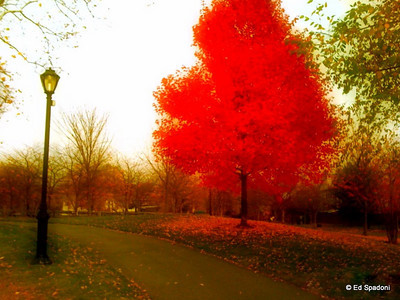 Late Splendor 11/10/09 Via iPhone, PhotoShop Mobile