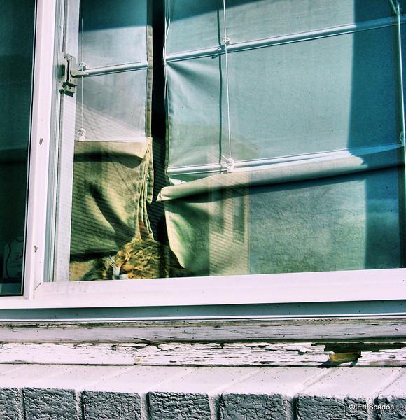 A city window<br /> 10/6/09