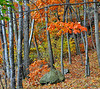 "The stand<br /> 10/31/09<br /> From the Pine Banks Park Gallery:  <a href=""http://bit.ly/3OUpOo"">http://bit.ly/3OUpOo</a>"