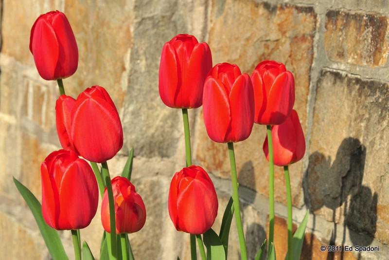 Spring, sprung.<br /> <br /> POTD 5/3/2011