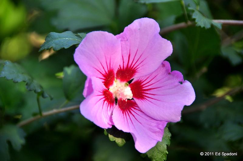Pretty in pink<br /> POTD 9/10/2011