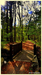 """""""You cannot travel the path until you have become the path itself.""""  Buddha  POTD 5/17/2011"""