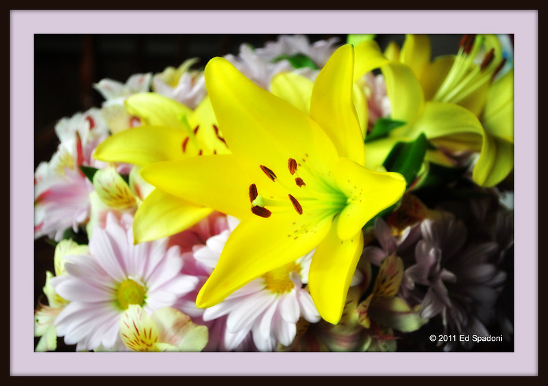 Another yellow lily.  This one processed with the Orton effect and framed in Picnik