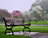 If April showers brought May showers, then, May showers will bring...?<br /> Today is starting out as gray as the previous 10.  So we must look for beauty as we find it.  POTD 5/22/2011