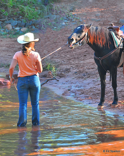 """You can lead a horse to water...""<br /> Sedona, AZ"