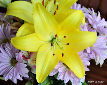 Yellow Lillies POTD 6/26/2011  These beautiful flowers are in a vase on the dining room table and were the first thing I saw this morning.  Two other views can be seen here:  http://www.edspadoni.com/Photography/And-then-some/17464620_7VVxbD.  I had a tough call deciding which to feature today.  Your thoughts?