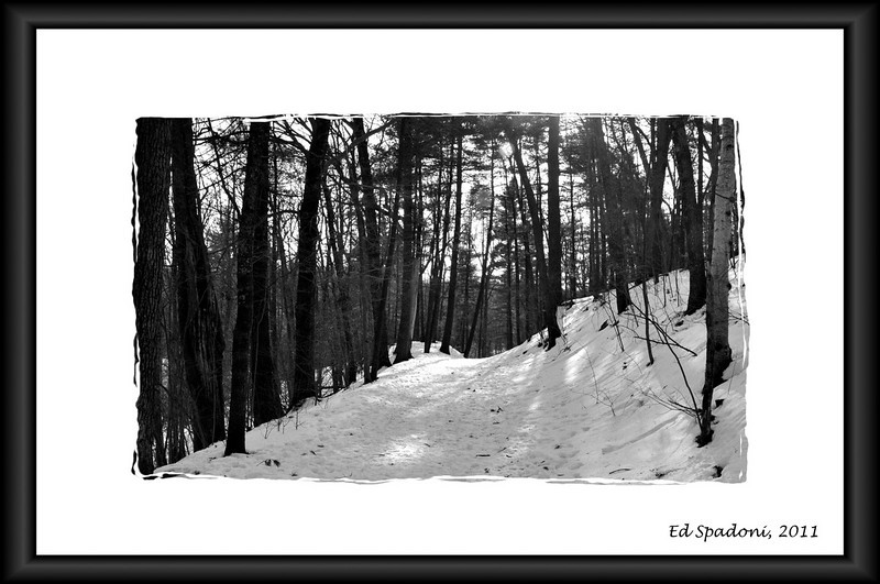 """It is good to have an end to journey towards; but it is the journey that matters in the end.""  Ursula K. LeGuin <br /> <br /> Noanet Woods, Dover, MA<br /> 1/4/2010"