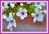 Spring<br /> 4/12/2010