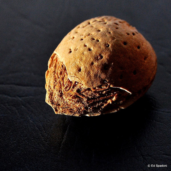 """God gives the nuts, but he does not crack them."" <br /> Franz Kafka<br /> 3/14/2010"