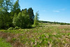29-05-2012 : Smooth landscape