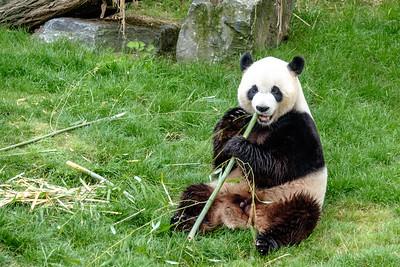 25-07-2015: My new Chinese friend