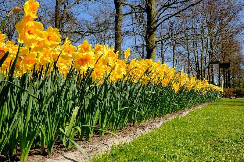 """30-04-2015: Spring at the """"Keukenhof"""""""