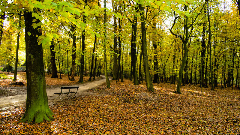 20-11-2013 : Cet automne, les feuilles ne veulent pas tomber - This fall, leaves do no not want to fall