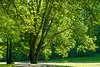 15-05-2012 : Tree view - Arborescence