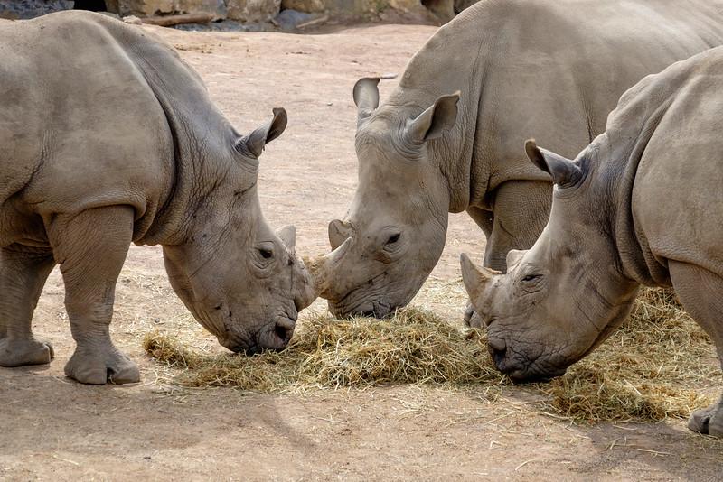 24-07-2015: Trhino - Trhinocéros
