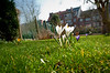 13-03-2012 :   Series. This could be spring #2  -   C'est peut-être le printemps #2