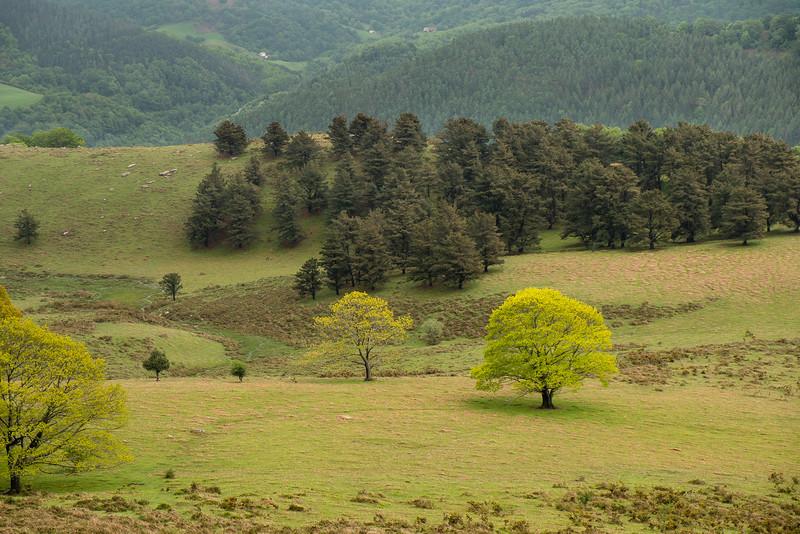 28-05-2013: Fifty shades of ... green - Cinquante nuances de ... vert<br /> Paysage des Pyrénées - landscape of the Pyrenees