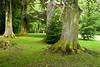 06-06-2012 : Deep forest